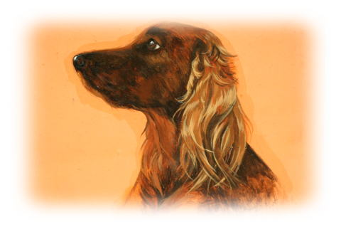 Irish Setter Tina My Dog