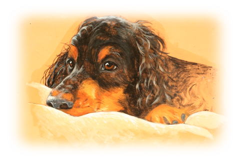 Gordon Setter Duke My Dog