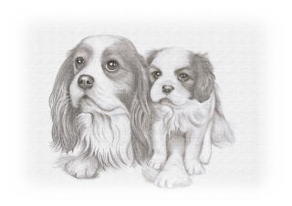 Cavalier King Charles Spaniel Friend Dog