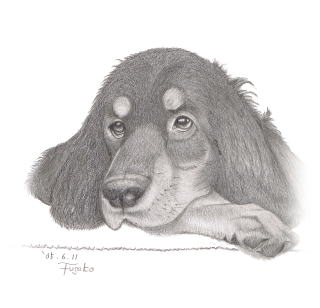 Gordon Setter My Dog